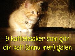 9 kattleksaker som driver din katt till vansinne