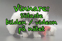 """Vinnaren av """"Sötaste bilden/videon på nätet""""-tävlingen"""