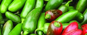 odla chili