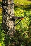 Praktisk jaktstol